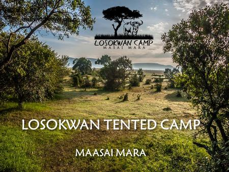 LOSOKWAN TENTED CAMP !!!...SERENITY IN THE WILD…!!!! MAASAI MARA.