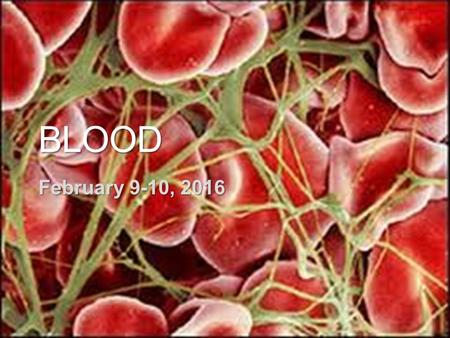Blood February 9-10, 2016 Watch until 4:30.