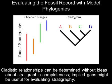 Evaluating the Fossil Record with Model Phylogenies Cladistic relationships can be determined without ideas about stratigraphic completeness; implied gaps.