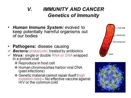 V.IMMUNITY AND CANCER Genetics of Immunity Human Immune System: evolved to keep potentially harmful organisms out of our bodies Pathogens: disease causing.
