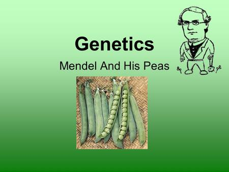 Genetics Mendel And His Peas. Genetics – the scientific study of heredity Gregor Mendel – 1800s His monastery garden pea plant experiments laid the foundations.