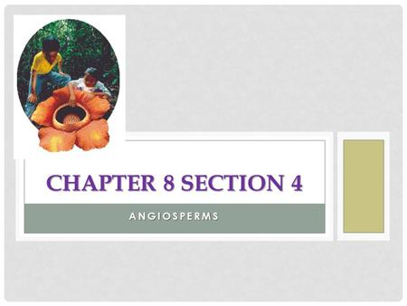 Chapter 8 Section 4 Angiosperms.