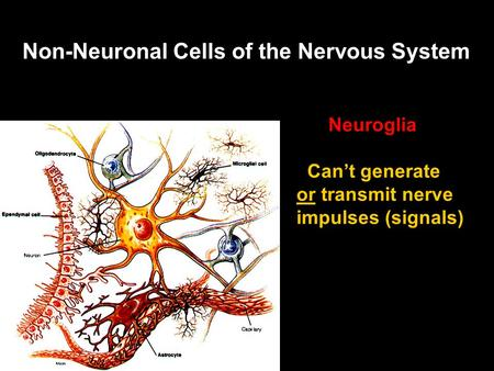 Non-Neuronal Cells of the Nervous System Neuroglia Can't generate or transmit nerve impulses (signals)