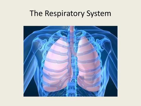The Respiratory System. Function To absorb oxygen and release carbon dioxide.