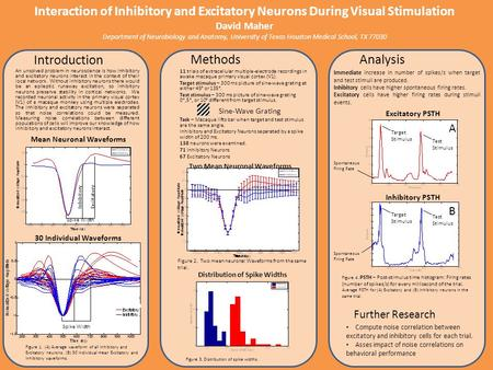 Two Mean Neuronal Waveforms Distribution of Spike Widths Interaction of Inhibitory and Excitatory Neurons During Visual Stimulation David Maher Department.