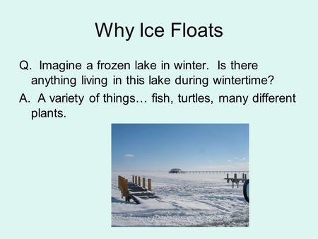 Why Ice Floats Q. Imagine a frozen lake in winter. Is there anything living in this lake during wintertime? A. A variety of things… fish, turtles, many.