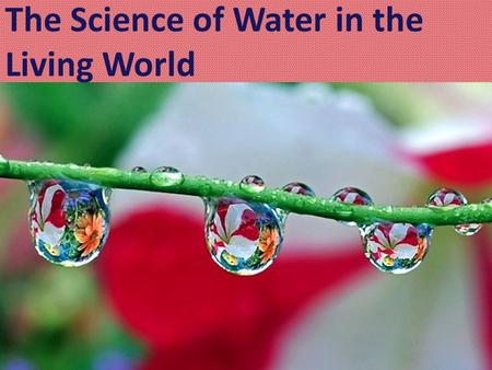 The Science of Water in the Living World. Water is a polar molecule. Polar Molecule: a molecule that has a slightly positive side and a slightly negative.