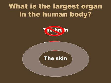What is the largest organ in the human body? The brain The liver The skin.