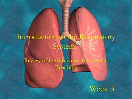 Introduction to the Respiratory System Review of the Structures Involved in Breathing Week 3.