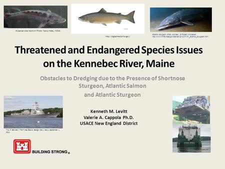 Threatened and Endangered Species Issues on the Kennebec River, Maine Obstacles to Dredging due to the Presence of Shortnose Sturgeon, Atlantic Salmon.