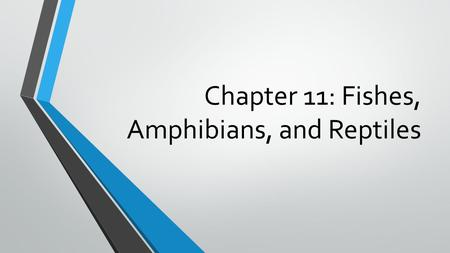 Chapter 11: Fishes, Amphibians, and Reptiles