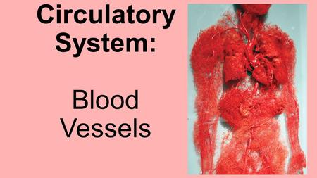 "The Circulatory System: Blood Vessels. 3 types of blood vessels Arteries  carry blood AWAY from heart (reminder tip: think ""A"" for Away) Veins  carry."
