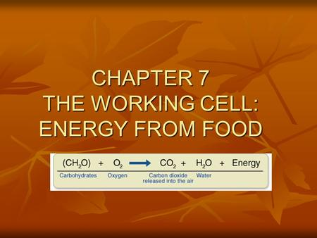 CHAPTER 7 THE WORKING CELL: ENERGY FROM FOOD