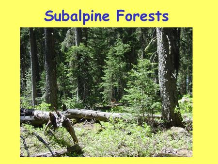 Subalpine Forests. *Flagged trees-trees sculpted by predominant winds.