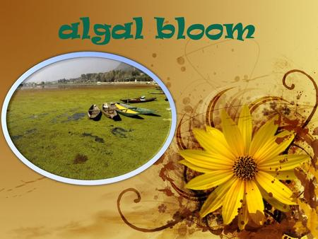 Algal bloom. Definition-1. An Algal bloom is rapid increase or accumulation in the population of algae(typically microscopic) in an aquatic system. 2.