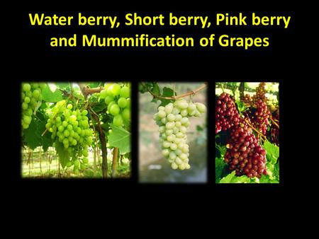 Water berry, Short berry, Pink berry and Mummification of Grapes.