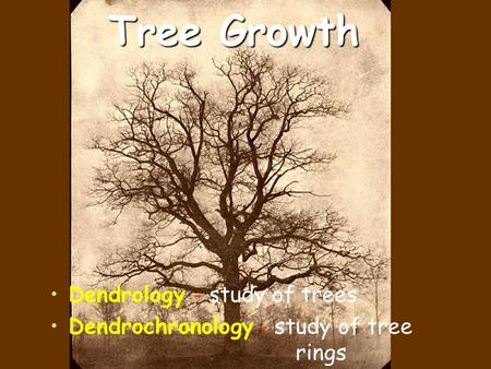 Tree Growth Dendrology - study of trees Dendrochronology - study of tree rings.