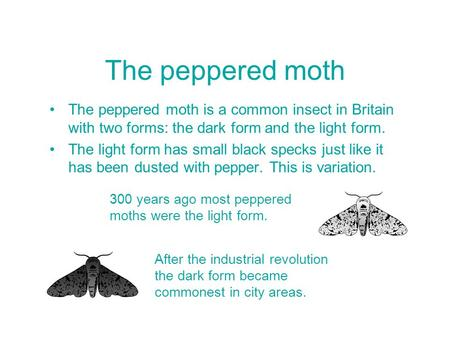 The peppered moth is a common insect in Britain with two forms: the dark form and the light form. The light form has small black specks just like it has.