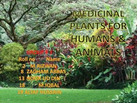 MEDICINAL PLANTS FOR HUMANS & ANIMALS
