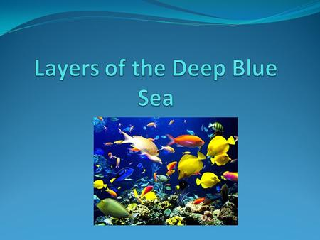 How many layers do you think the ocean has? The ocean has exactly 5 layers!