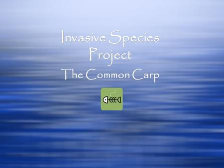 Invasive Species Project Invasive Species Project The Common Carp.