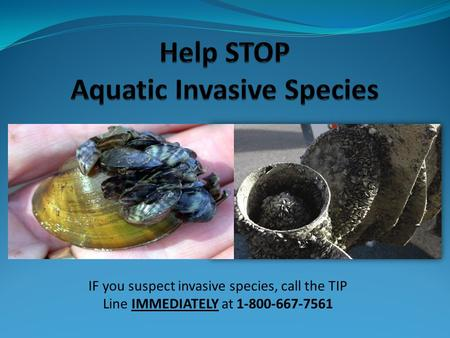 Help STOP Aquatic Invasive Species