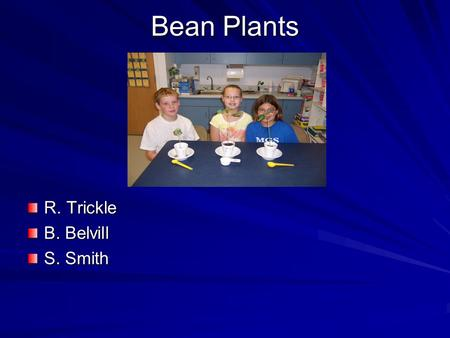 Bean Plants R. Trickle B. Belvill S. Smith. Purpose Do different amounts of water affect the growth of bean plants?