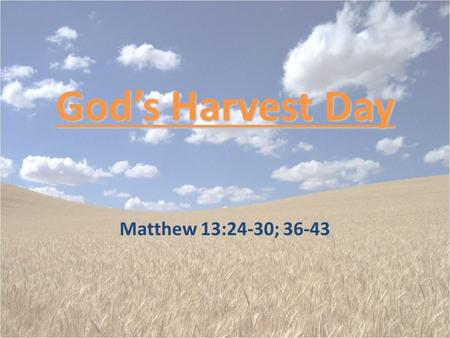 "God's Harvest Day Matthew 13:24-30; 36-43. Facts About The Parable The plant we refer to as ""tares"" is more properly known as bearded darnel. – It is."