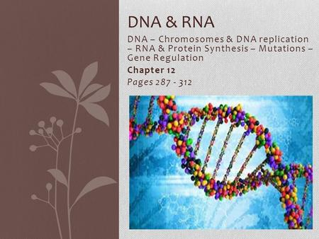 DNA – Chromosomes & DNA replication – RNA & Protein Synthesis – Mutations – Gene Regulation Chapter 12 Pages 287 - 312 DNA & RNA.