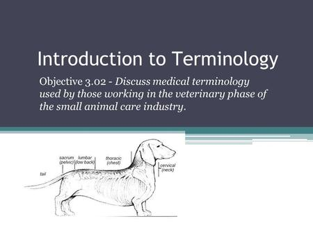 Introduction to Terminology Objective 3.02 - Discuss medical terminology used by those working in the veterinary phase of the small animal care industry.