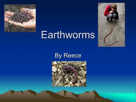 Earthworms By Reece. How do earthworms help the earth? Earthworms contribute to the growth of plants. Earthworms are a food source for birds. Earthworms.