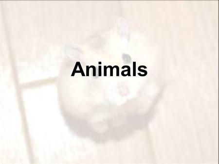 Animals. 1.Animals are all heterotrophs, meaning that they obtain nutrients and energy by feeding on organic compounds from other organisms.