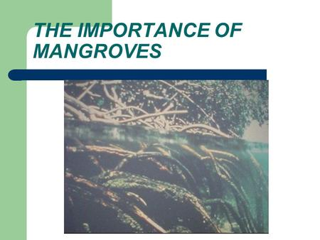 THE IMPORTANCE OF MANGROVES. MANGROVES ARE ONE TYPE OF ESTUARY. ESTUARIES ARE WHERE FRESH WATER AND SALTWATER MIX. SALT MARSH IS AN ESTUARY MAINLY OF.