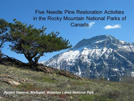 Robert Sissons, Biologist, Waterton Lakes National Park Five Needle Pine Restoration Activities in the Rocky Mountain National Parks of Canada.