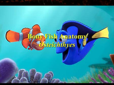 Bony Fish Anatomy Osteichthyes Three Classes of Fish 1.Agnathan: Jawless fish, *Hagfish, Lamprey 2.Chondrichthyes: Cartilaginous Fish *Sharks, Rays,