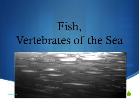  Fish, Vertebrates of the Sea Image source. What do you think make fish different from all other vertebrates? Discuss with your team, then we will brainstorm.