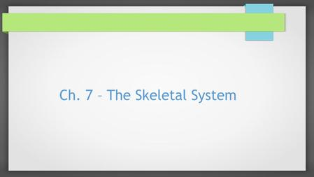 Ch. 7 – The Skeletal System. Introduction  Bones are ALIVE  They have many functions  There are a total of 206 bones in the human body.