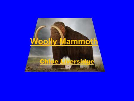 Woolly Mammoth Chloe Liversidge. Habitat The woolly mammoth was found in the plans of North America and Eurasia.