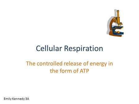 Cellular Respiration The controlled release of energy in the form of ATP Emily Kennedy 3A.