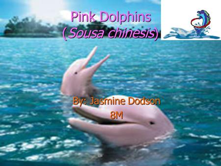 Pink Dolphins (Sousa chinesis) By: Jasmine Dodson 8M.