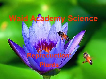 Waid Academy Science Reproduction: Plants. In plants, the male sex cell is called sperm 1.True 2.False 10.