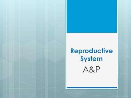 Reproductive System A&P. Reproductive System  Function=produce new life  Gonads (sex glands), ducts (tubes), and accessory organs can be found in both.
