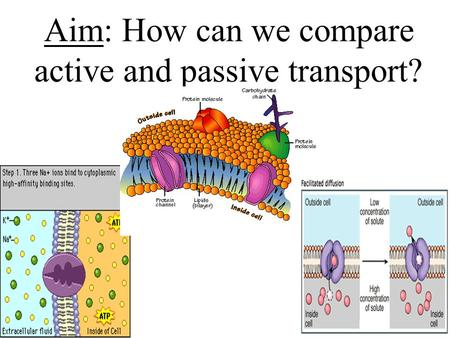 Aim: How can we compare active and passive transport?