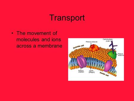 Transport The movement of molecules and ions across a membrane.