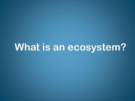 What is an ecosystem?. Stable Ecosystem What do you think it means to have a stable ecosystem?