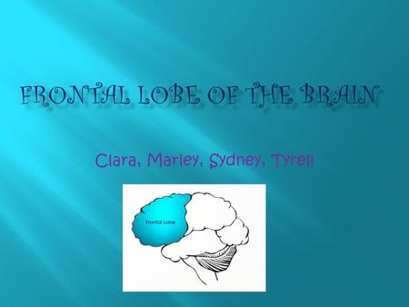 Clara, Marley, Sydney, Tyrell The frontal lobe does many things. It controls your body functions, It lets you have a personality, it controls your way.