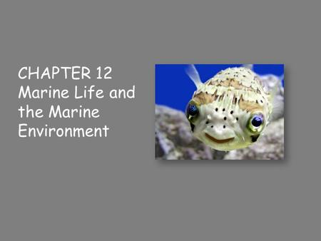 CHAPTER 12 Marine Life and the Marine Environment.