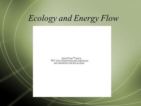 Ecology and Energy Flow. Vocabulary  Ecology: the study of the interactions among organisms and their environments  between biotic (living) and abiotic.