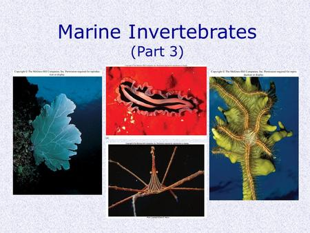 Marine Invertebrates (Part 3). Phylogenetics Protostomes (mouth first) Deuterostomes (mouth second) Embryo cell division simple ----------------------------