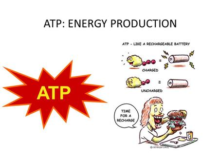 ATP: ENERGY PRODUCTION ATP. Energy The body needs a constant supply of energy to perform every day tasks such as respiration and digestion. Energy is.